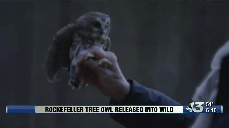 Good News - Owl Released Into The Wild