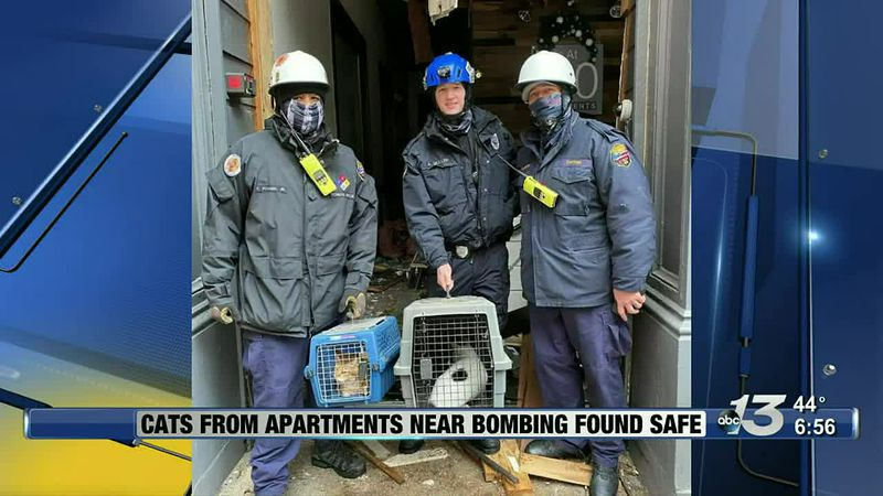 Good News: Cats From Apartments Near Bombing Found Safe
