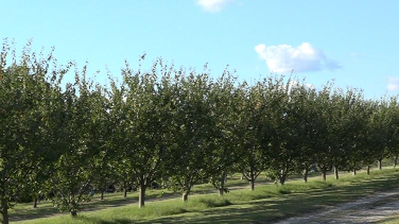 Jackson's Orchard and Nursery