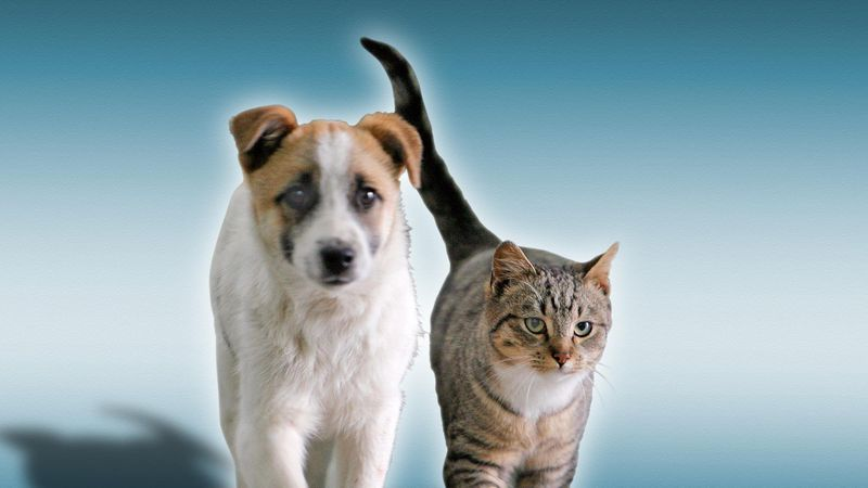 The BGWC Humane Society relies heavily on donations from the community in order to treat every...