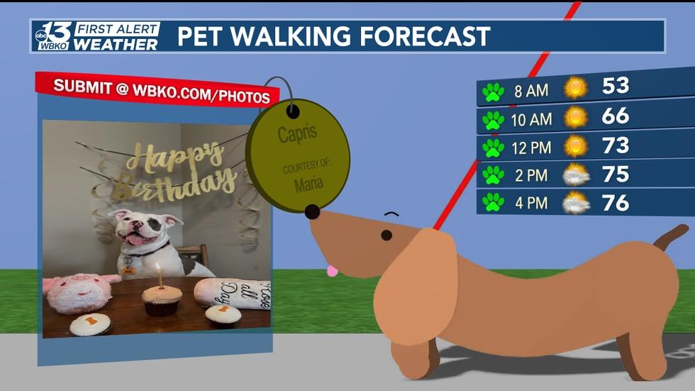 Pet walking forecast