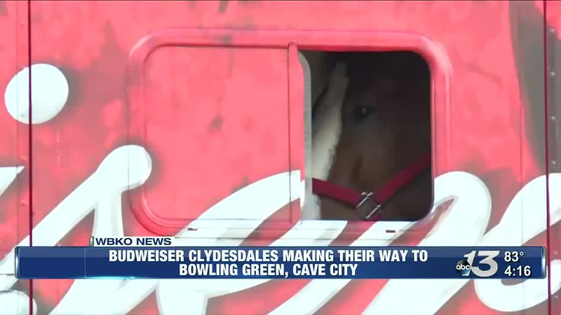 Budweiser Clydesdales coming to Southern Lanes in BG