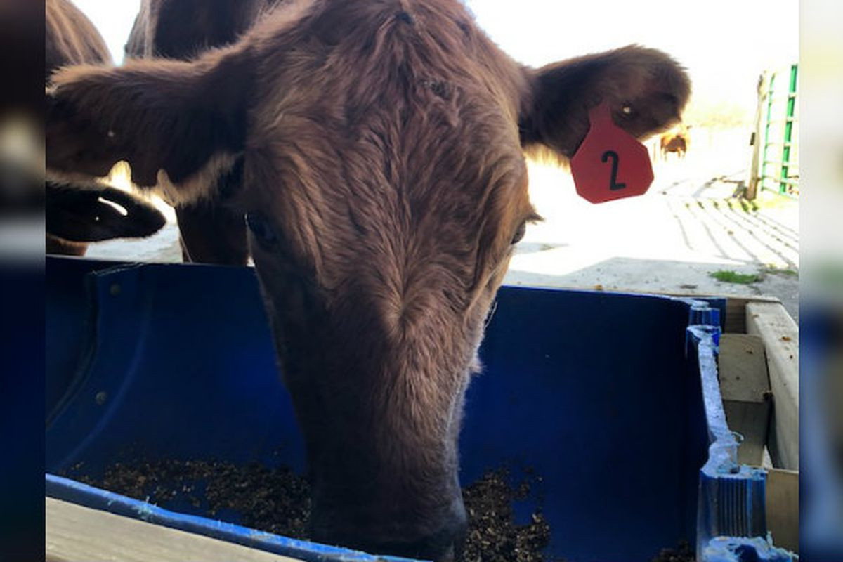 Most Kentucky Cattle To Require Rfid Tags By 2023