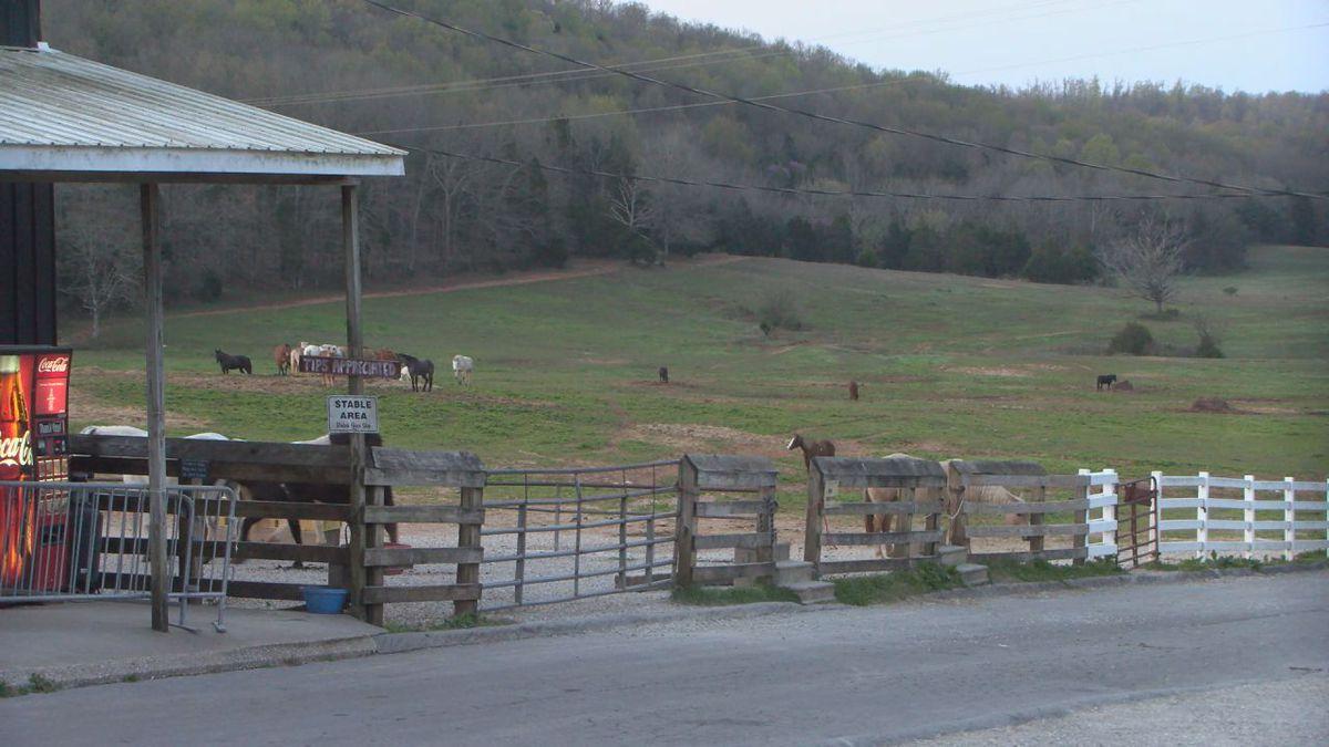 Horses at Jessie James
