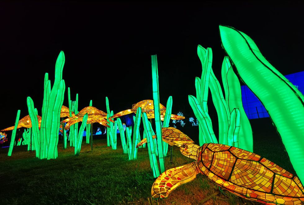 Turtle lights display at The Louisville Zoo