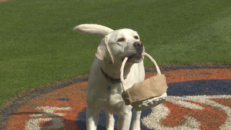 Turbo, the bat dog got the Bowling Green Hot Rods, is getting some more training before the...