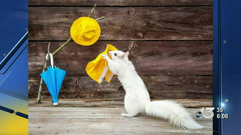 Good News: White Squirrel Model