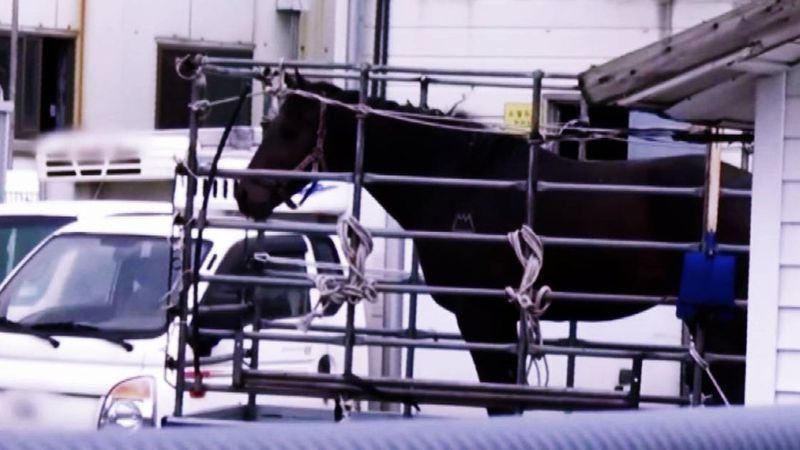 According to PETA, 400 or more thoroughbreds from the U.S. are sold to South Korea each year.