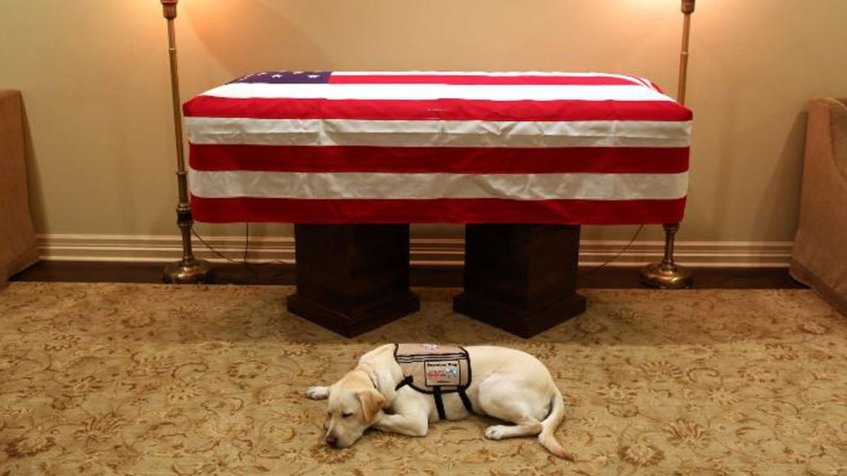 Sully served by Bush's side from June 2018 until his death last November. (Source: Jim McGrath/Twitter)
